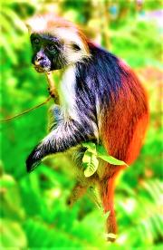 A playful monkey in Zanzibar, Tanzania